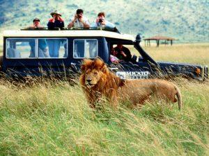 african_safari1